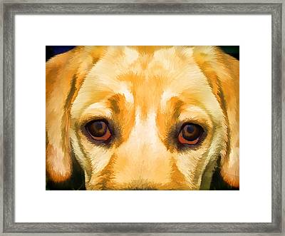 Face Of Yellow Lab Framed Print