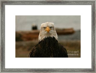 Face Off Framed Print by Crystal Magee