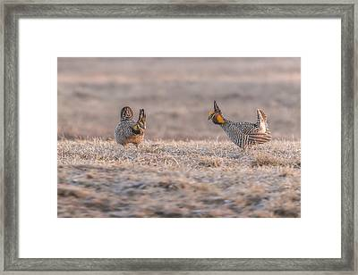 Face Off Framed Print by Thomas Young