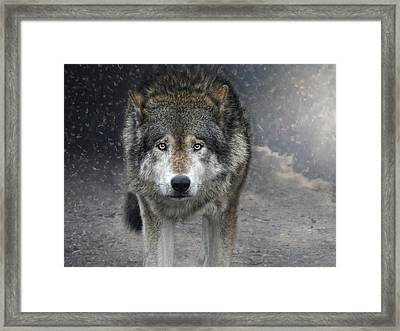 Face To Face With The Wolf Framed Print
