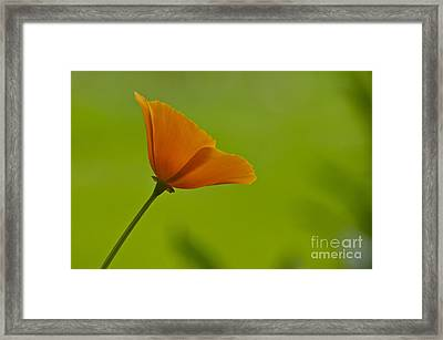 Face To The Sun Framed Print by Sean Griffin