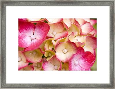 Faces Of Nature Framed Print