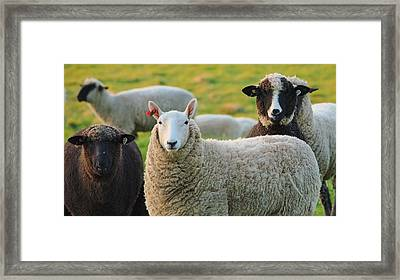 Framed Print featuring the photograph Faces by Paul Noble