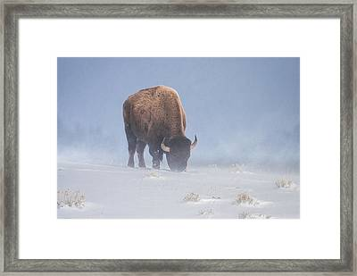 Framed Print featuring the photograph Faces The Blizzard by Jack Bell