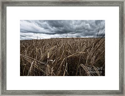 Facing The Storm Color Framed Print by John Farnan