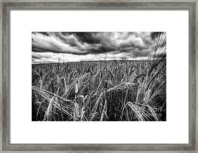 Facing The Storm Framed Print by John Farnan