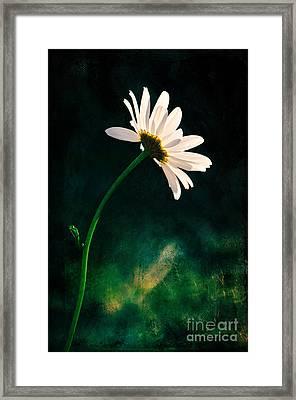Facing The Sun Framed Print by Randi Grace Nilsberg