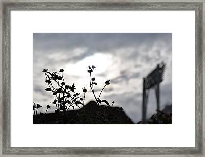 Fade Away Framed Print by Regina Avila