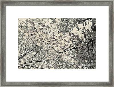 Faded Autumn Leaves Framed Print by Ted Guhl