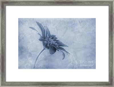 Faded Beauty Cyanotype Framed Print