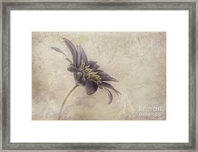 Faded Beauty Framed Print