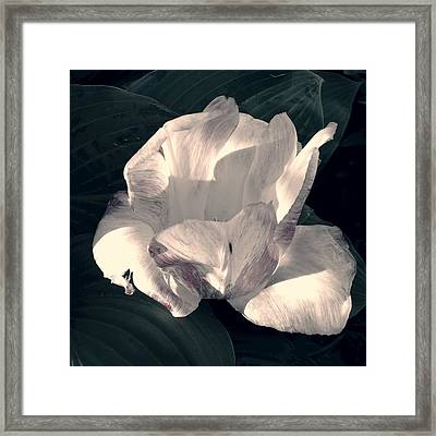 Framed Print featuring the photograph Faded Beauty by Photographic Arts And Design Studio