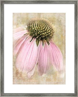 Faded Coneflower Framed Print