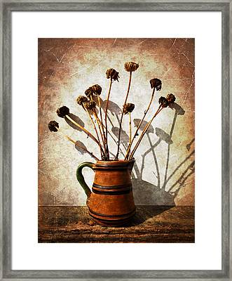 Faded Daisies Framed Print by Shawna Rowe