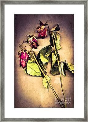 Faded Glory Framed Print by Jan Bickerton
