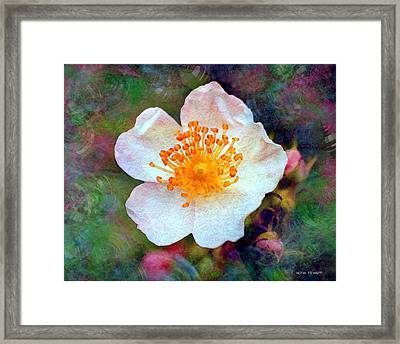 Faded Memories Series - Into The Evening Framed Print by Moon Stumpp