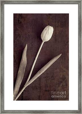 Faded Memories Single White Tulip Framed Print