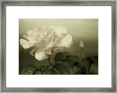 Framed Print featuring the photograph Faded Rose by Mary Wolf