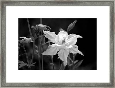Faded Framed Print by Silke Brubaker