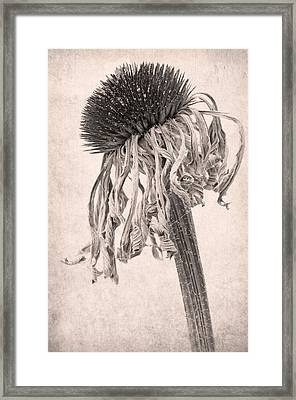 Faded Star Framed Print by Marion Galt