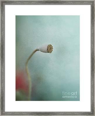faded summer I Framed Print by Priska Wettstein