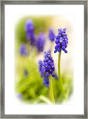 Fading Framed Print by Caitlyn  Grasso