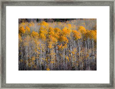 Fading Fall Framed Print
