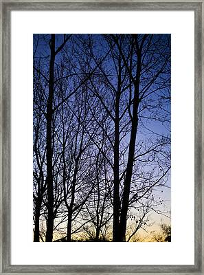 Framed Print featuring the photograph Fading Light Through The Sycamore Trees by Micah Goff