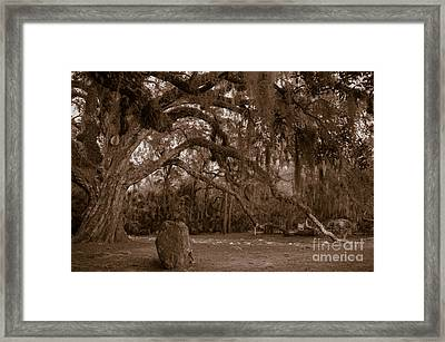 Fairchild Oak Framed Print