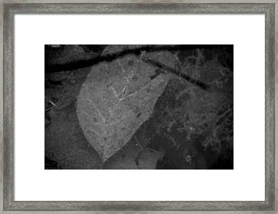 Framed Print featuring the photograph Fairies Are Coming Around The Mountain by Steven Macanka