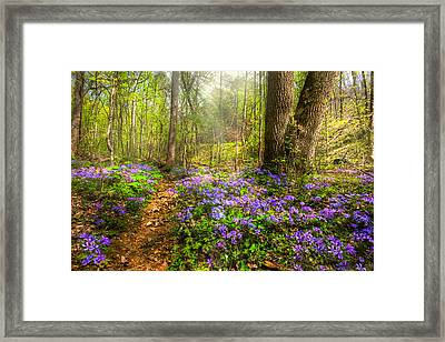Fairies Forest Framed Print by Debra and Dave Vanderlaan