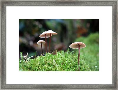 Fairy Bonnets Framed Print by Gerry Bates