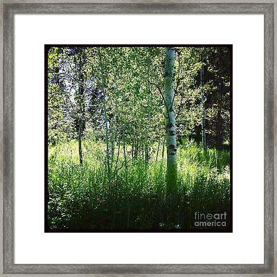 Fairy Circle Framed Print