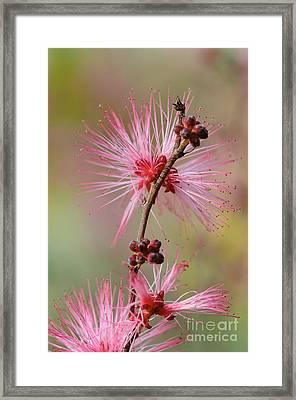 Fairy Duster Framed Print