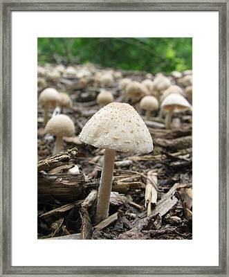Framed Print featuring the photograph Fairy Homes by Mary Zeman