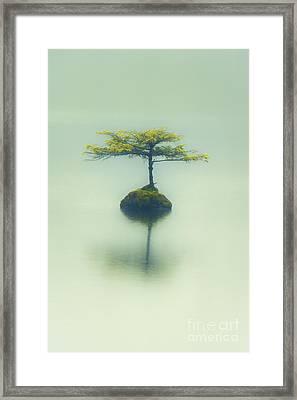 Fairy Lake Fir Framed Print