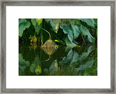 Framed Print featuring the photograph Fairy Pond by Evelyn Tambour