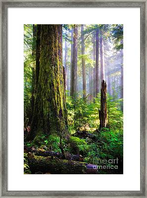 Fairy Tale Forest Framed Print by Inge Johnsson