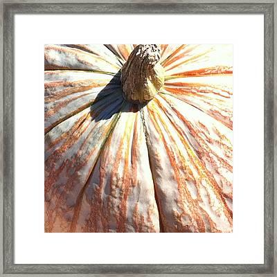 Framed Print featuring the photograph Fairy Tale Pumpkin by Denyse Duhaime