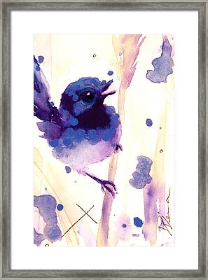 Fairy-wren Framed Print by Dawn Derman