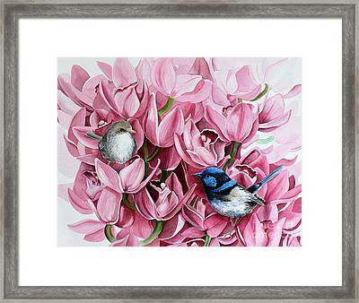 Fairy Wrens And Orchids Framed Print