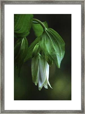 Framed Print featuring the photograph Fairybells Of The Forest by Betty Depee