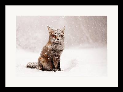 Animal In Snow Framed Prints