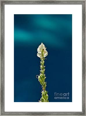 Faith Is Peace Framed Print