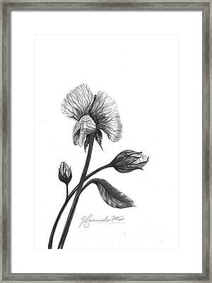 Faith Of A Flower Framed Print by J Ferwerda