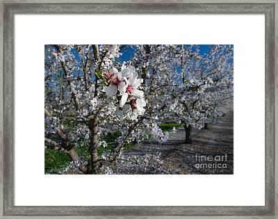 Faithful Framed Print