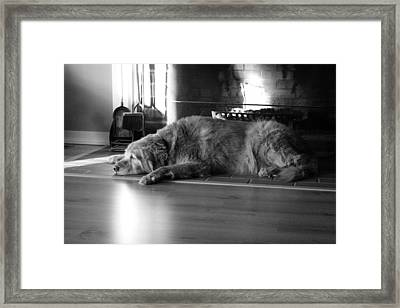 Framed Print featuring the photograph Faithful by Meaghan Troup