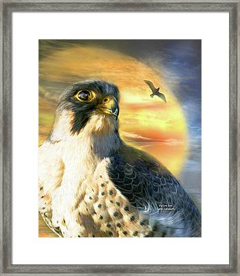 Falcon Sun Framed Print by Carol Cavalaris