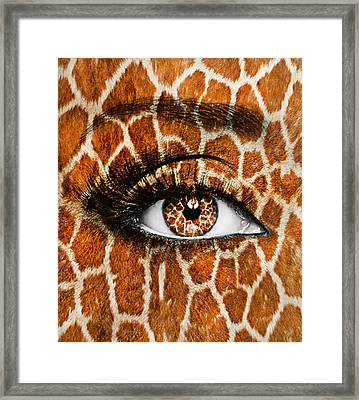Falcon Framed Print by Yosi Cupano