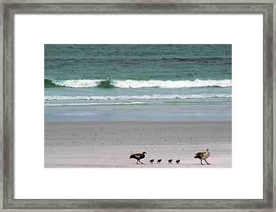 Falkland Islands Framed Print